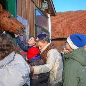 Streicheleinheiten fuer Kinder und das Pferd am Bartlgut