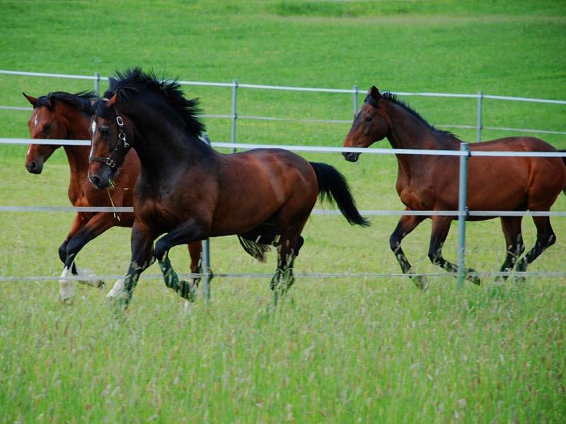 fuer_unsere_pferde_1